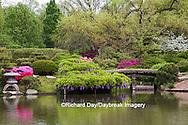 65021-03606 Bridge in Japanese Garden in spring, MO Botanical Gardens, St Louis, MO