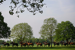 © London News Pictures. 12/05/2016. Windsor, UK. Cavalry horses being taken on a canter through the grounds on the first day of the 2016 Royal Windsor Horse Show, held in the grounds of Windsor Castle in Berkshire, England. The opening day of the event was cancelled due to heavy rain and waterlogged grounds. This years event is part of HRH Queen Elizabeth II's 90th birthday celebrations.  Photo credit: Ben Cawthra/LNP