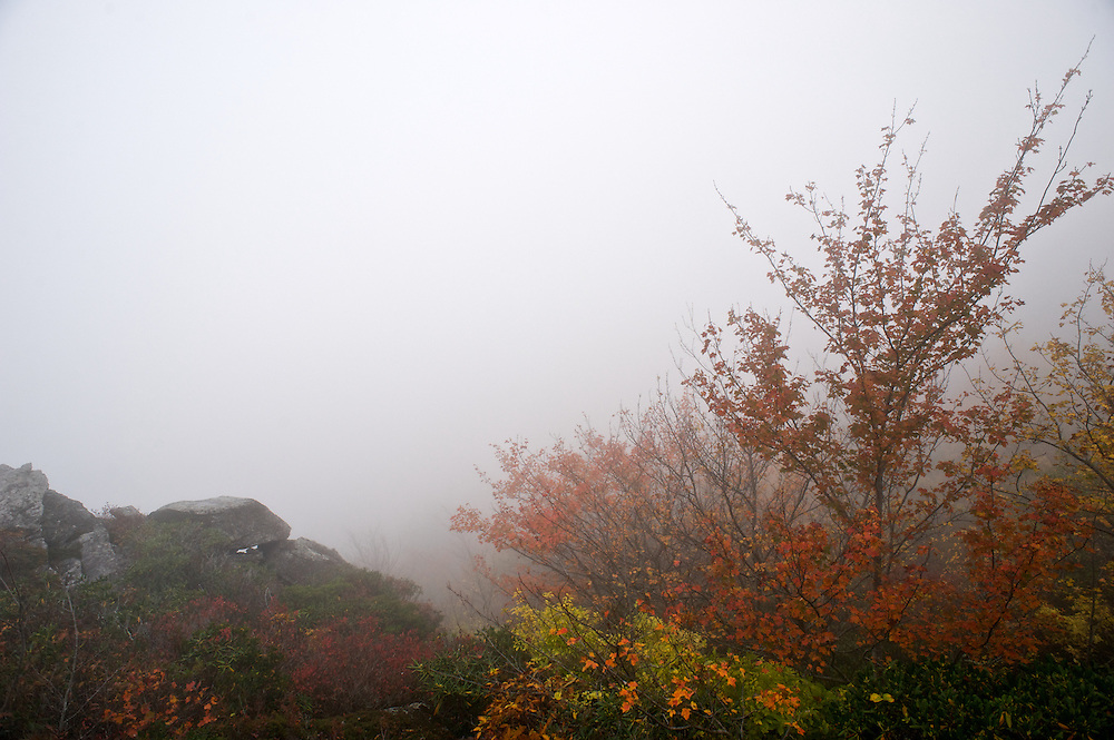Fall colors adorn a mountain top on a foggy  day along the Blue Ridge Parkway