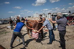 Livestock market and the Slaughtering continued without permission on the first day of Eid Al-Adha in Sahintepe, Basakssehir , neighbourhood of Istanbul, urban transformation quarter, Turkey, on August 21, 2018. Photo by Can Erok/DHA/ABACApRESS.COM
