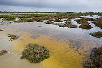 Marshland with salt resistant vegetation, Camargue, France