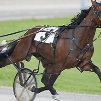 Standardbred Racing Flamboro Downs - Confederation Cup