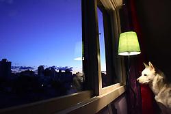 Akita observa a vista no final de tarde em Porto Alegre. FOTO: Jefferson Bernardes/Preview.com
