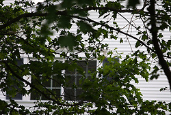 2 May 2010: A maple tree obscures the window on a home.