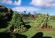 Canoe Garden, Kahanu Gardens, Hana Coast, Maui, Hawaii