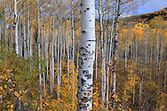 Rocky Mountains in Autumn, Rhe Colorado Rockies, USA