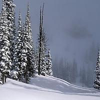 Snowy woods near The Big Mountain ski area, Whitefish, Montana.