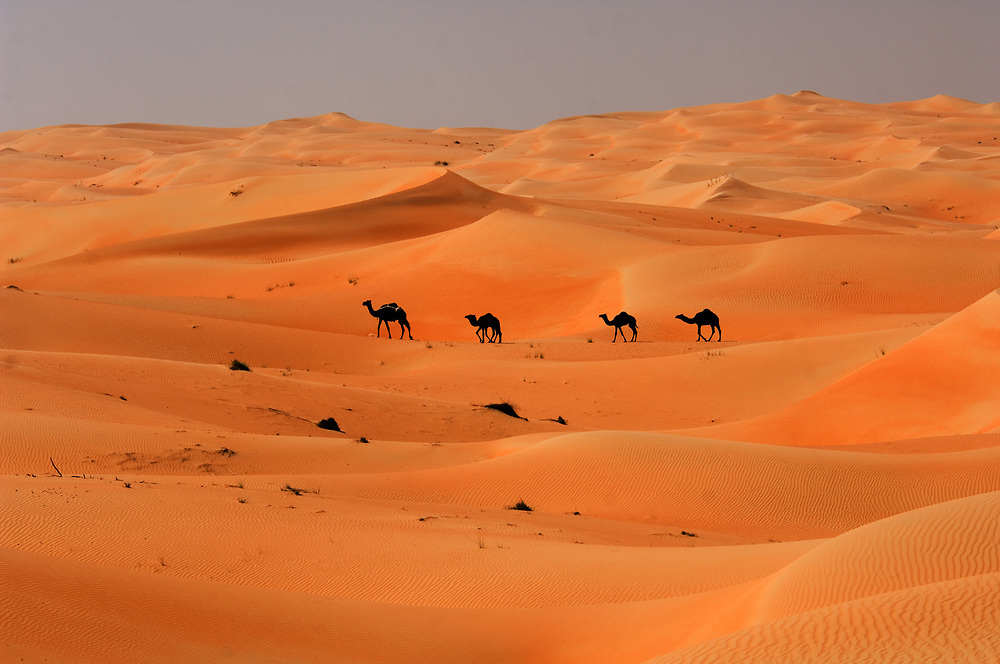 "A camel train crossing the desert near the ""Empty Quarter"", Abu Dhabi Province"