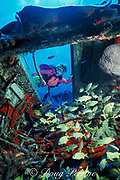 diver peers inside airplane wreck, <br /> Cozumel, Mexico, <br /> ( Caribbean Sea )  MR 140 -MR 142