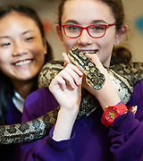 12/11/2018 Repro free: Galway Science and Technology Festival, the largest science event in Ireland, runs from 11-25 November featuring exciting talks, workshops and special events. Full programme at GalwayScience.ie. <br /> <br /> Python from The Bug Doctors collection ( Dr Michel Dugon- NUI Galway) with Caitlin Sills from Our Lady's College Galway with Amoy Meng . Photo:Andrew Downes, Xposure.