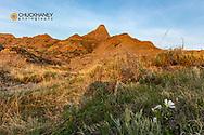 Wildflowers and badlands in Makoshika State Park in Glendive, Montana, USA