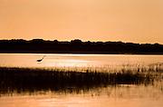A crane walks through a marshy creek on the coast of North Carolina at sunset
