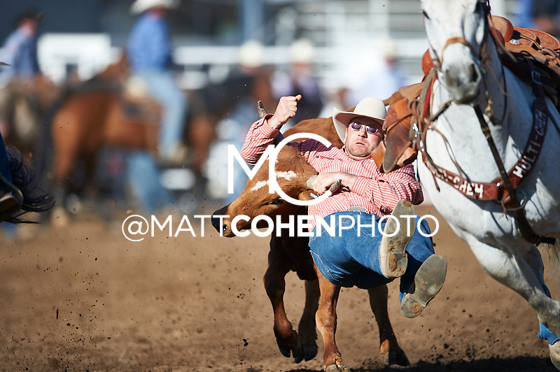 Steer wrestler Seth Brockman of Wheatland, WY competes at the Clovis Rodeo in Clovis, CA.<br /> <br /> <br /> UNEDITED LOW-RES PREVIEW<br /> <br /> <br /> File shown may be an unedited low resolution version used as a proof only. All prints are 100% guaranteed for quality. Sizes 8x10+ come with a version for personal social media. I am currently not selling downloads for commercial/brand use.