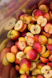 Crab apples in a saucepan ready for making crab apple jelly