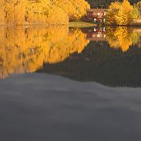 Fall-colored cottonwoods & aspens surround Wiltsie house & Mystic Heights Pond, near Bozeman Montana.