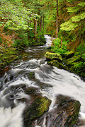 Lower Lunch Falls Loop Trail, Tongass National Forest, Ketchikan, Alaska.