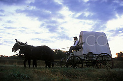 man in a western wagon pulled by two mules