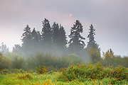 Haze from wildfires partially obscures the sun and blankets the wetlands of the North Creek Park in Bothell, Washington.