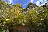 The main avenue through Stoke Wood, Oxfordshire.