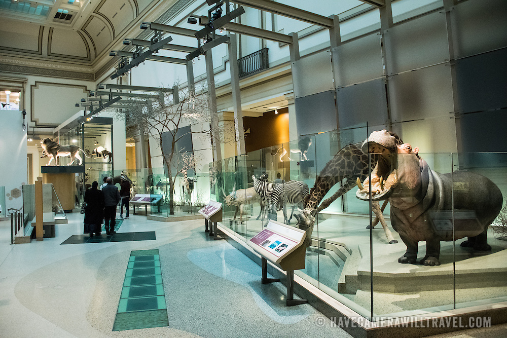 The mammals hall at the Smithsonian National Museum of Natural History on the National Mall in Washington DC.