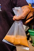 Inde, Etat de Gujarat, Ahmedabad, classé Patrimoine Mondial de l'UNESCO, boutique de thé, transport du thé // India, Gujarat, Ahmedabad, Unesco World Heritage city, tea shop, chaï pocket