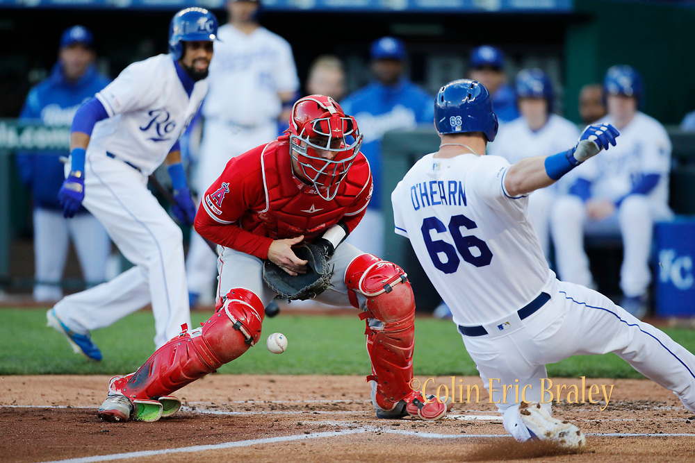 Kansas City Sports Photographer-Los Angeles Angels catcher Jonathan Lucroy (20) is unable to hold on to the ball as Kansas City Royals' Ryan O'Hearn (66) scores from second as Billy Hamilton, left, looks on in the second inning of a baseball game at Kauffman Stadium in Kansas City, Mo., Saturday, April 27, 2019. AP Photo-Colin E. Braley