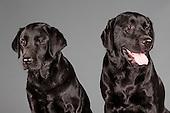 Gaby et Sheldon