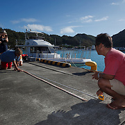 Measuring part of an Architeuthis giant squid feeding arm that I recovered after seeing a sperm whale (Physeter macrocephalus) breach in the deep waters of the Ogasawara islands in Japan. The squid arm, which was only a portion of the entire feeding tentacle, was 351 centimeters.