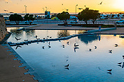 Seagulls rest in a fountain pool at sunset Photographed in Figueira da Foz, Portugal