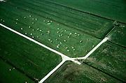 Nederland, Gelderland,Tielerwaard, 04-04-2002; rood-bonte koeien in de wei; de paden in het weiland zijn van beton om te voorkomen dat het vee deze vertrapt; melkvee, melk, zuivel, landbouw, veeteelt, weiland, veenweide, polder, gras, groen, sloten, drainage, waterhuishouding, ruiverkaveling. Veeteelt.<br /> luchtfoto (toeslag), aerial photo (additional fee)<br /> photo/foto Siebe Swart