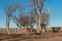 CABALLO ATADO A UN ALAMBRADO, ARBLOES EUCALYPTUS Y MOLINO DE AGUA EN UN TAMBO EN INVIERNO, PROVINCIA DE SANTA FE, ARGENTINA (PHOTO © MARCO GUOLI - ALL RIGHTS RESERVED)