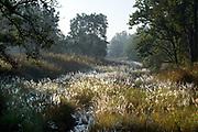 River & Reeds, Landscape, Kanha Tiger Reserve, National Park, Madhya Pradesh, India