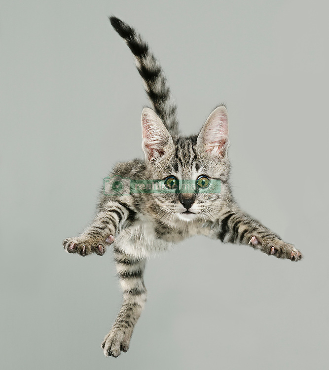 """German photographer, Julia Christe is at it again! This time she has the photographed the beautiful and hilarious 'Flying Cats' photo series. Christe created 'Flying Dogs' in 2007 and the second series of 'Flying Dogs' in 2011 and it was so successful, that 'Flying Cats' has been the next project, with the book having only been released three weeks ago. <br /> <br /> Christe enjoys photographing dogs and cats because she loves that they have such a variety of expressions at their disposal. """"I enjoy this particular work, especially when they express joy and happiness. Sometimes it's also just downright funny"""" says Christe.<br /> <br /> Christe hopes that people will find the series as fun as she does and that it shows some insight into how cats come in so many shapes and different characters. <br /> <br /> However, while the majority of feedback has been overwhelmingly positive, some has been quite critical. """"Some people thought we had used a trampoline or thrown the cats from a great height or even tortured them somehow. None of that is true! The cats are dropped from a very small height onto a foam mat. There is a making of the film which shows the photo shoot"""" says Christe. <br /> <br /> Flying Dogs was published by Simon&Schuster in 2016 and Heyne Verlag in 2017 and Flying Cats has been published by Knesebeck just weeks ago.<br /> <br />  <br /> <br /> Name:<br /> Julia Christe<br /> <br /> Age:<br /> 45<br /> <br /> From:<br /> Born in Tettnang, used to live in Berlin, still like to work in the studios of Berlin, live on the countryside in Wiendorf, close to the Baltic Sea.<br /> <br /> Location of shoot:<br /> Berlin and Frankfurt/Main in the studios<br /> <br /> Date of shoot:<br /> Date of shoots between 12/2016 and 2/2018, book published 2018"""