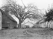 """9904-G15. caption published in Oregonian Nov. 24, 1929 section 6 page 1:""""Ancient elms on famous Reedville farm"""""""