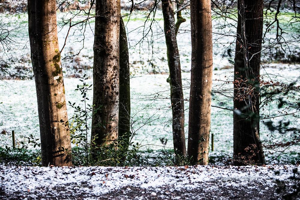 Snow amongst the trees in the countryside of Jersey, Channel Islands