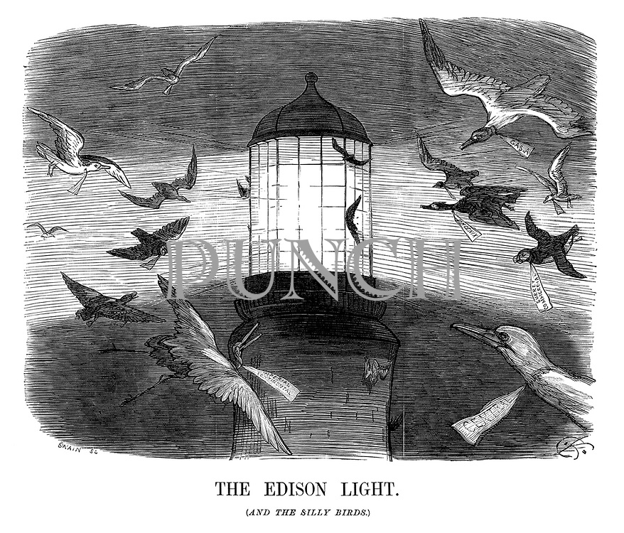 The Edison Light. (and the silly birds.)