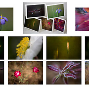 5 X 7 GREETING CARDS: A selection of 10 photographs from the 80x80 Project PRICE: $30.00 plus shipping