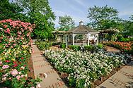 Rose Garden, Southampton, NY Long Island, New York