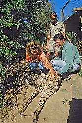 People Petting Female Cheetah