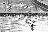 Mallard ducks in Bellevue's Downtown Park canal BW