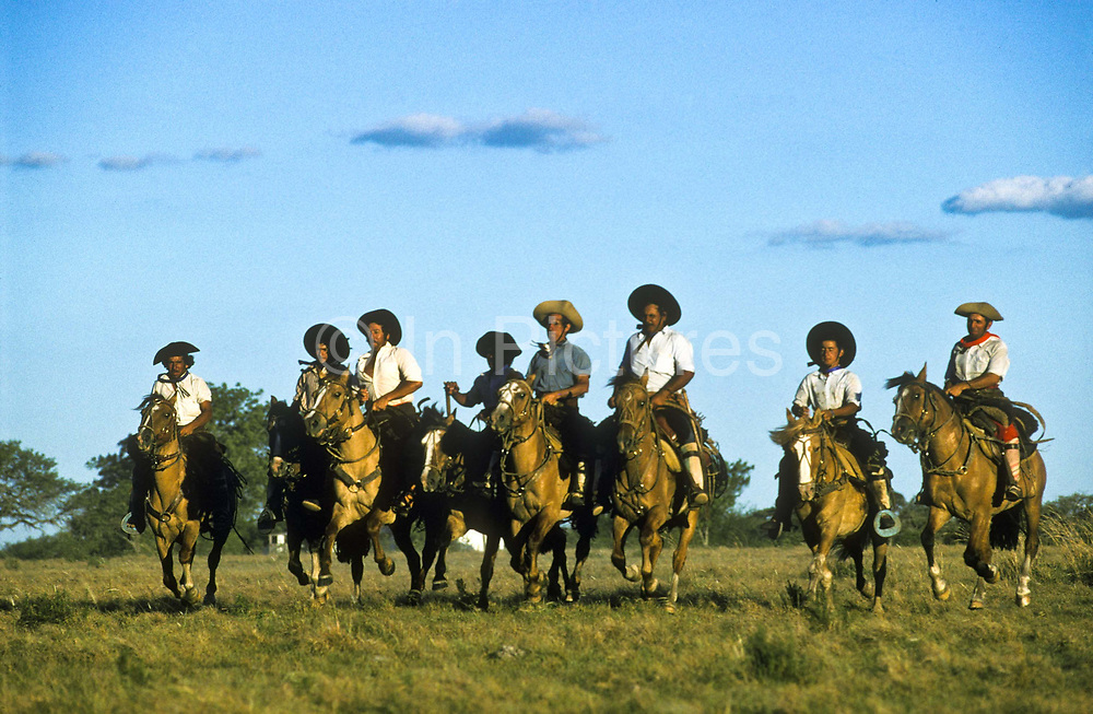 Gauchos galloping on ranch heading out to heard cattle on Argentina's vast grasslands, known as the Pampa.