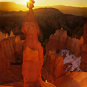Perhaps the best known of all of the hoodoos in Bryce Canyon National Park, Utah, Thor's Hammer rises alone in the morning light.