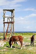 Horses near Gibara, Holguin, Cuba.