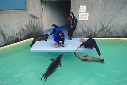 Working With Harbor Seals At The New England Aquarium