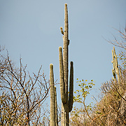 Cactus plant in the desert landscape of Sierra Madre de Oaxaca