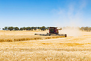 Case combine harvester cutting the last of the wheat crops as the harvest season comes to an end near Gidginbung, New South Wales, Australia <br />