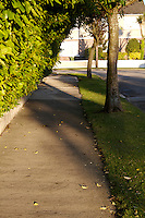 Overhanging hedge at path in suburban area of Dublin Ireland in the evening time