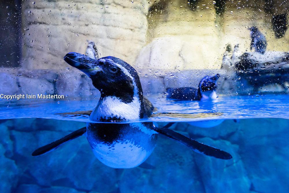 Underwater Zoo aquarium at Dubai Mall in United Arab Emirates
