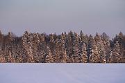 Sunset shines over edge of forest with snow covered trees and white snowy fields with few tracks over them, Kemeri National Park (Ķemeru Nacionālais parks), Latvia Ⓒ Davis Ulands   davisulands.com
