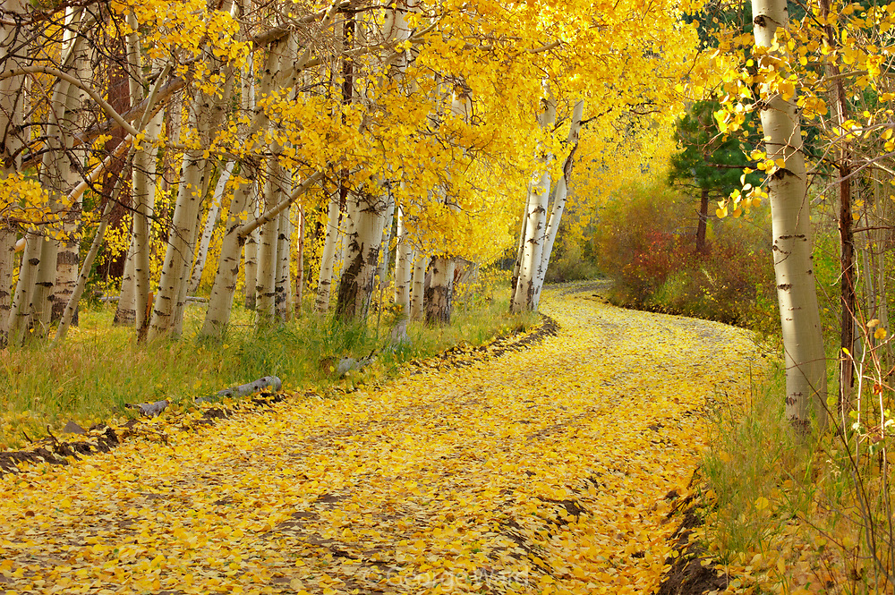 Winding Road with Fall Color,Inyo National Forest, Mono County, California
